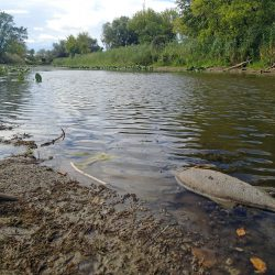 Eutrophication may lead to fish mortality!