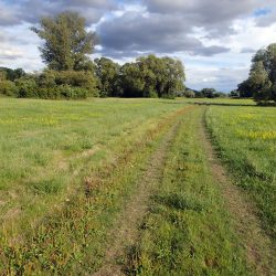 The protection of valuable meadow areas is a central part of the project